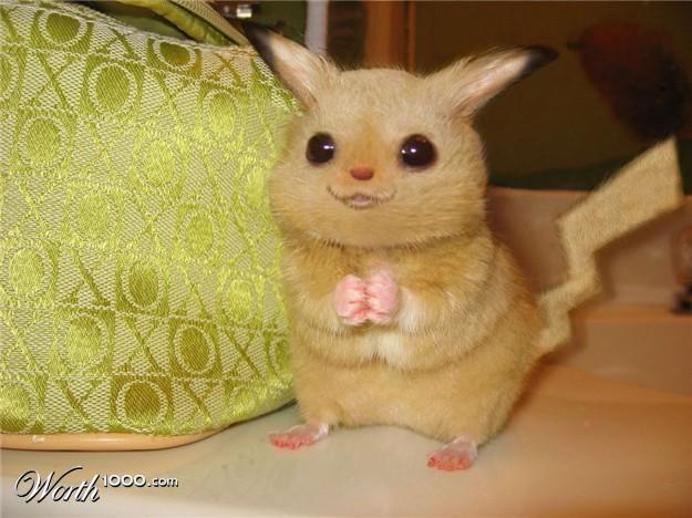 pikachu-real.jpg
